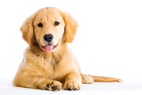 Therapy Pets: Service Dogs