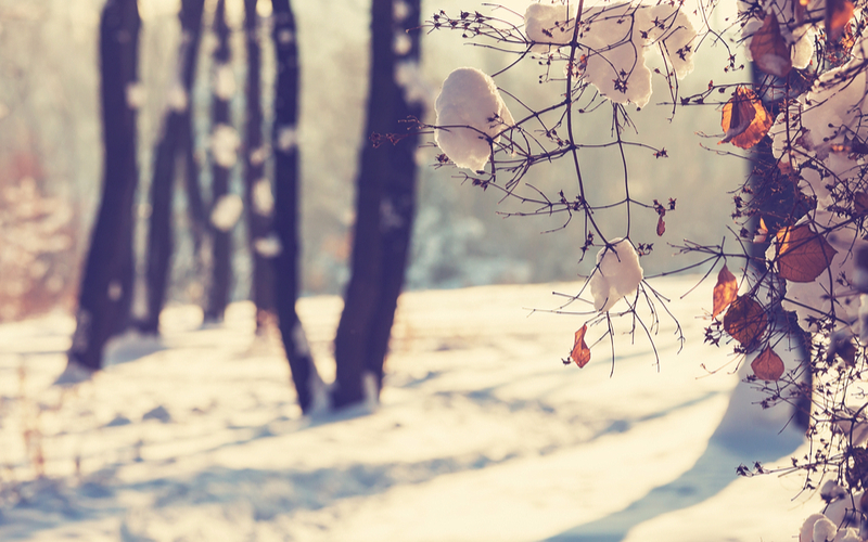 Special Needs Families: Winter